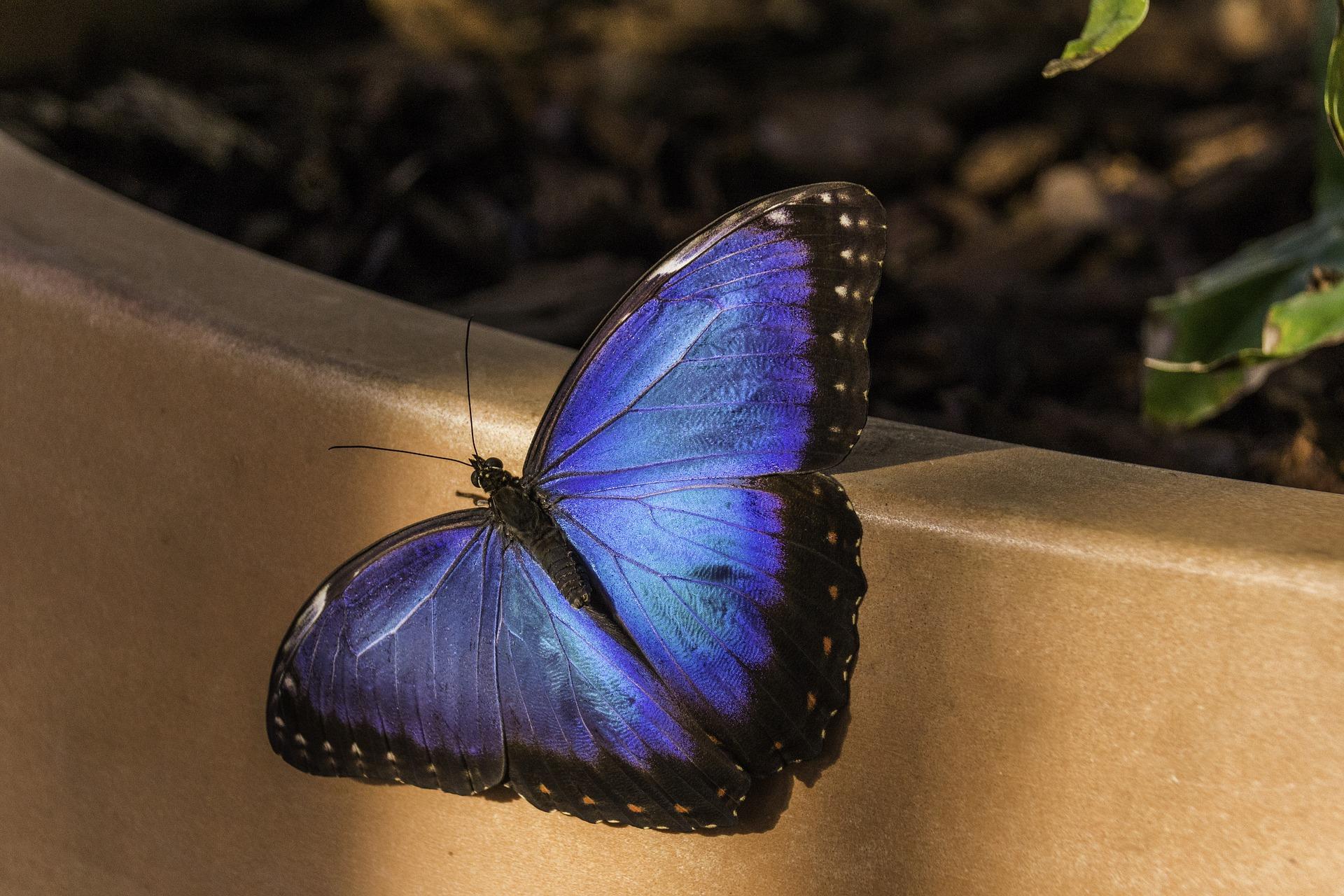 butterfly-2003038_1920