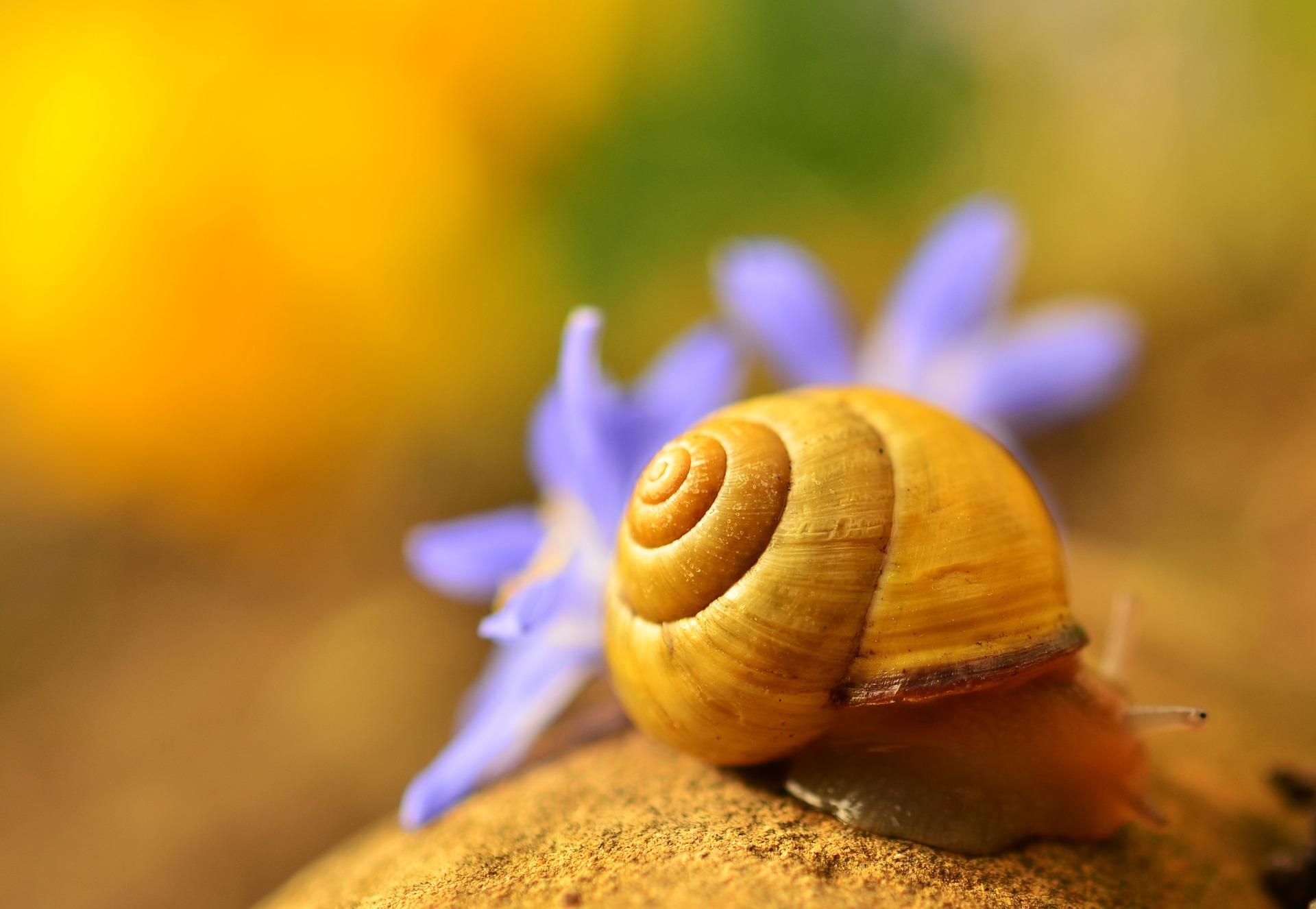 shell-1303027_1920